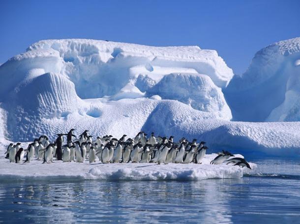Adelie-Penguins-in-Hope-Bay-Antarctica