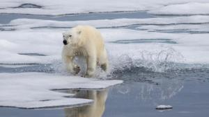 Sea ice optional [image credit: BBC]
