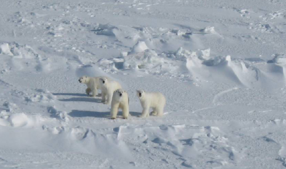 Rode and Regehr 2010_Chukchi_report2010_triplets redone PNG