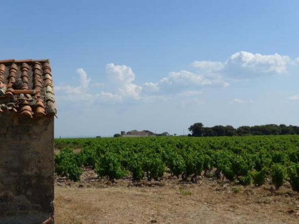 French vineyards like the one in the photograph are experiencing earlier harvests in recent years as the region's climate has warmed. CREDIT Credits: Elizabeth Wolkovich/Harvard University