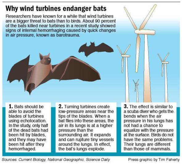 bats-graphic1