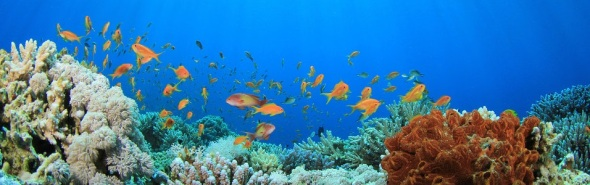 coral_reef_and_tropical_fish