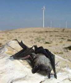 bat-killed-by-wind-turbine-blades