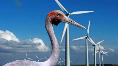 Brolga-and-wind-farm