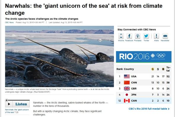 Narwhals_at risk from climate change_CBC 13 Aug 2016 headline