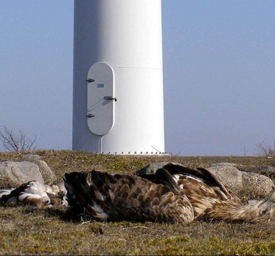 dead_eagle_at_base_of_turbine