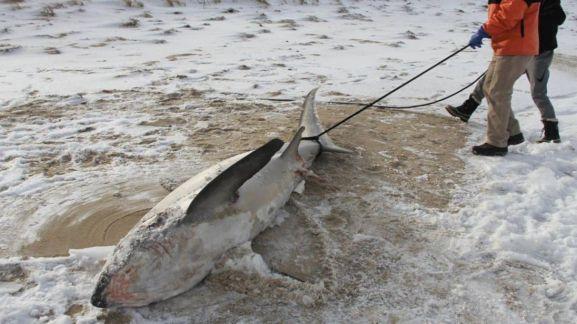 skynews-shark-frozen-shark_4198928