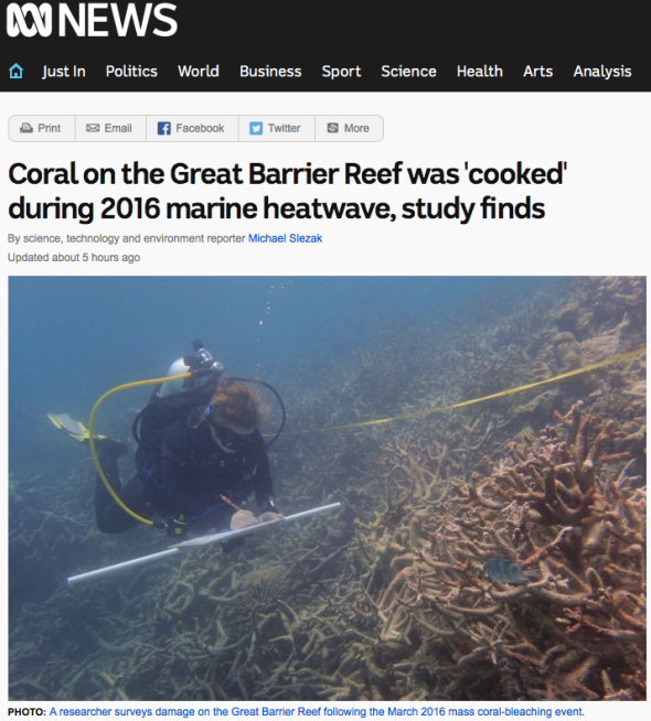 Coral on the Great Barrier Reef was 'cooked' during 2016 marine heatwave, study finds - ABC News ABC