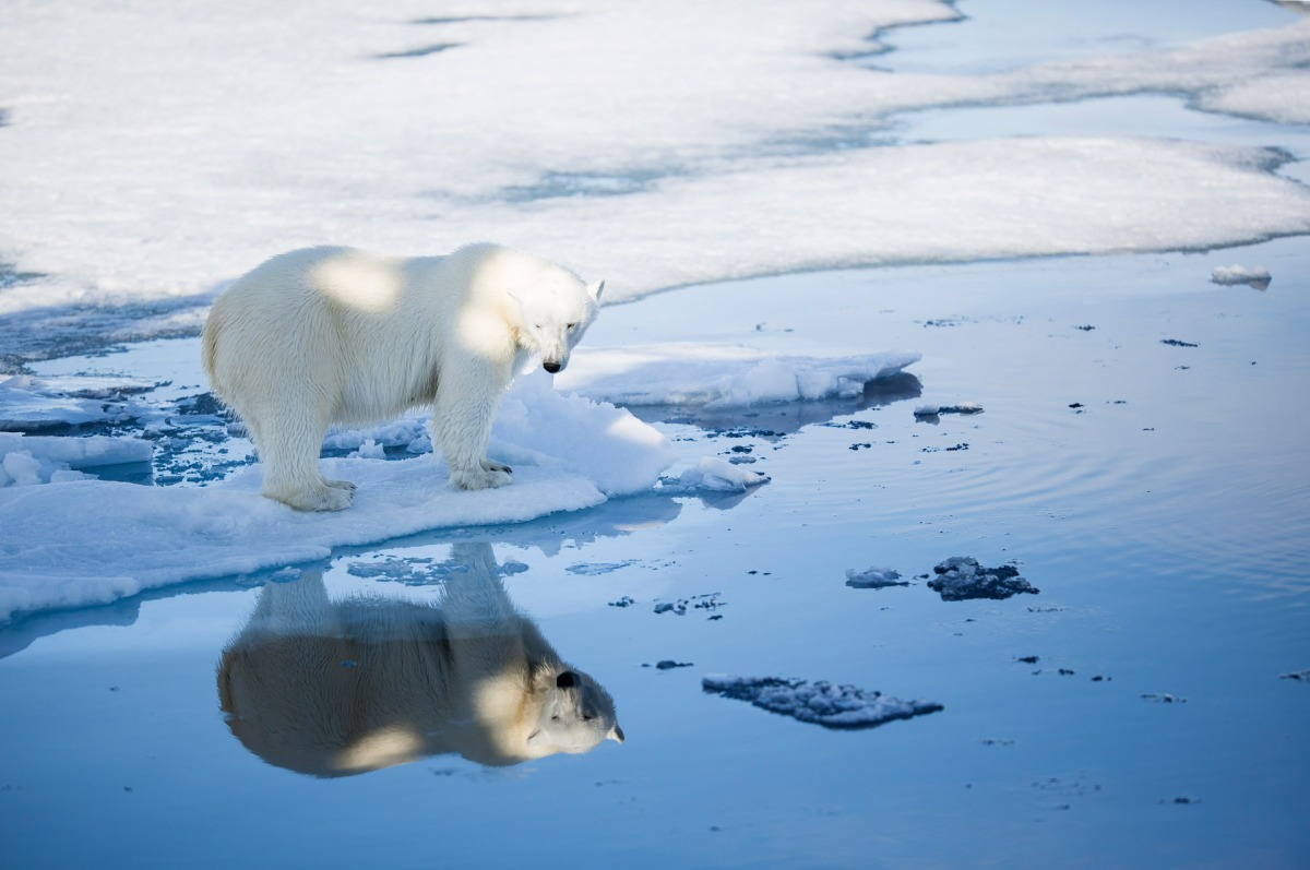 LESS Svalbard Polar Bear Habitat During The Early Holocene Than Now