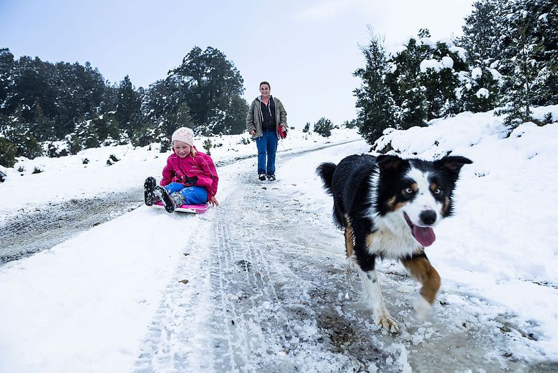 The low temperatures have created ideal conditions for snowfall, with many parts in the Australian alps receiving more snow than recent years. Picture- Getty.