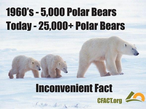 Polar Bears CFACT CLIMATISM