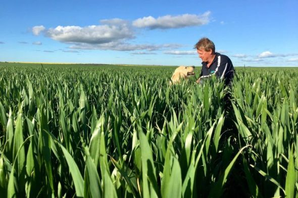 Chapman Valley farmer Brady Green, with his dog Charlie, says weather over the coming weeks is critical. (ABC Rural - Jo Prendergast)
