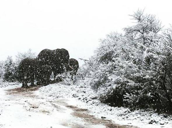 Elephants and giraffes spotted in the snow as blizzards hit South Africa | London Evening Standard