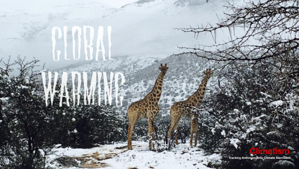 SOUTH AFRICA GIRAFFES SNOW - CLIMATISM