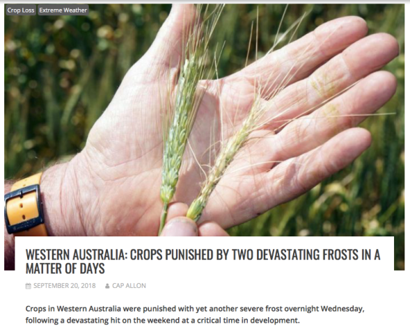 Western Australia - Crops Punished by Two Devastating Frosts in a Matter of Days - Electroverse