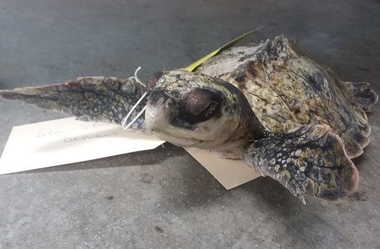 Frozen-Turtle-e1543135456358