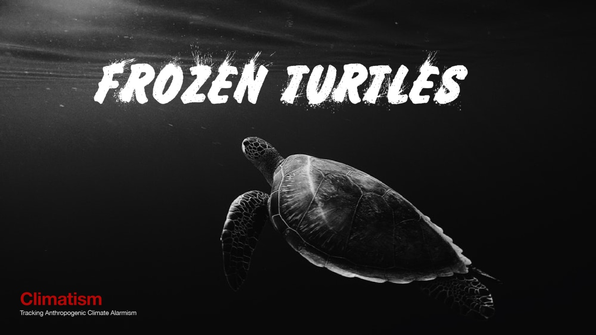 IT's So Cold In Texas That Sea Turtles Are Freezing In The Ocean