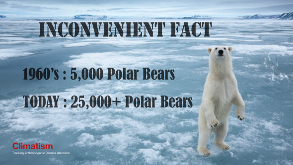 polar bears - inconvenient numbers - climatism