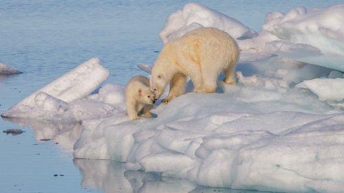 polarbear1_wikimedia_andreas-weith-photo-svalbard-sm.jpg