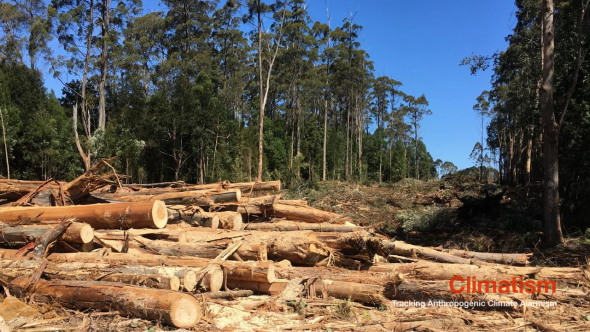 Old-growth trees cut down for windfarm transmission corridor - CLIMATISM.png