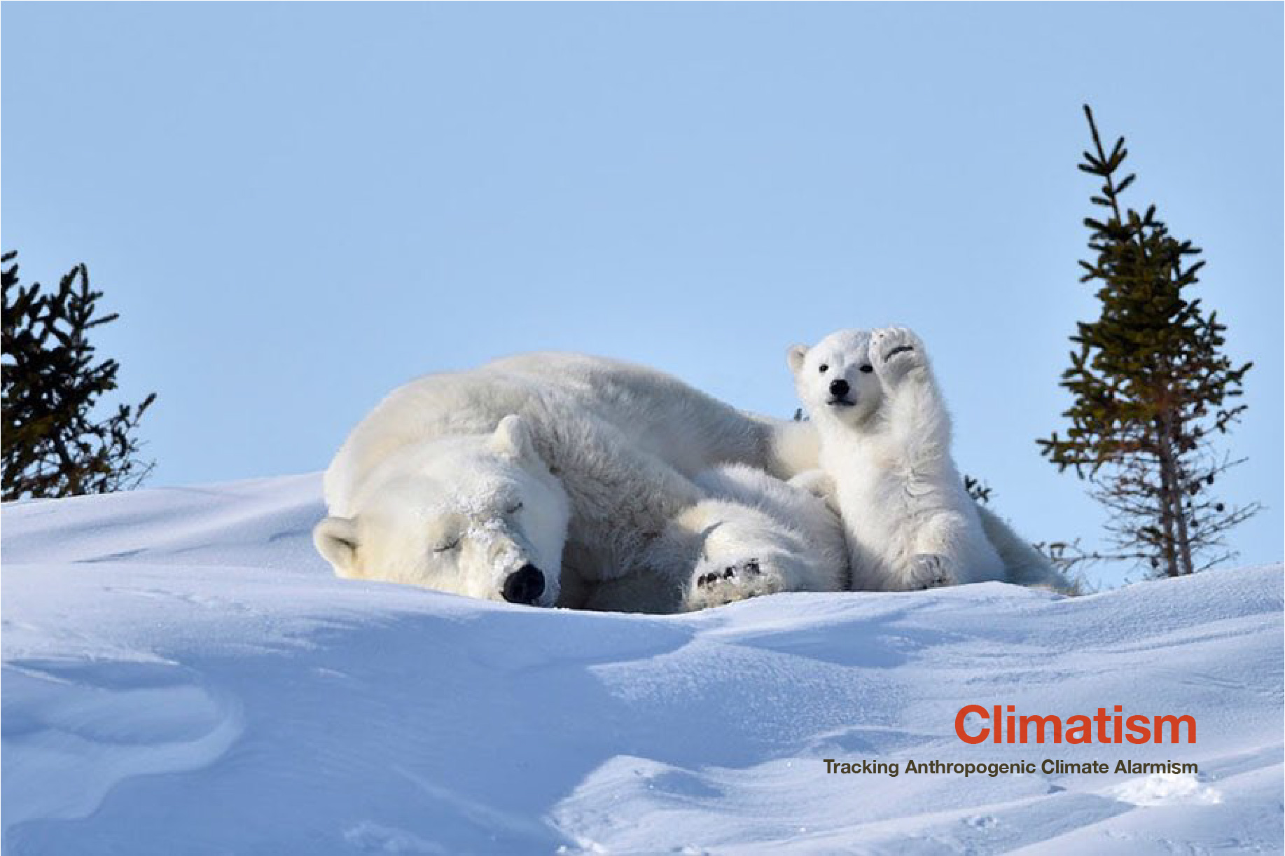 POLAR BEARS - The New Symbol Of Climate Change Realism and A Stable Arctic | CLIMATISM